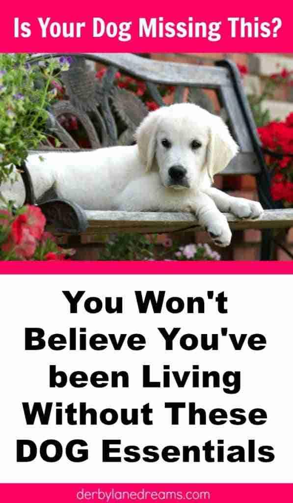 Best Dog Products, best dog items, dog essentials