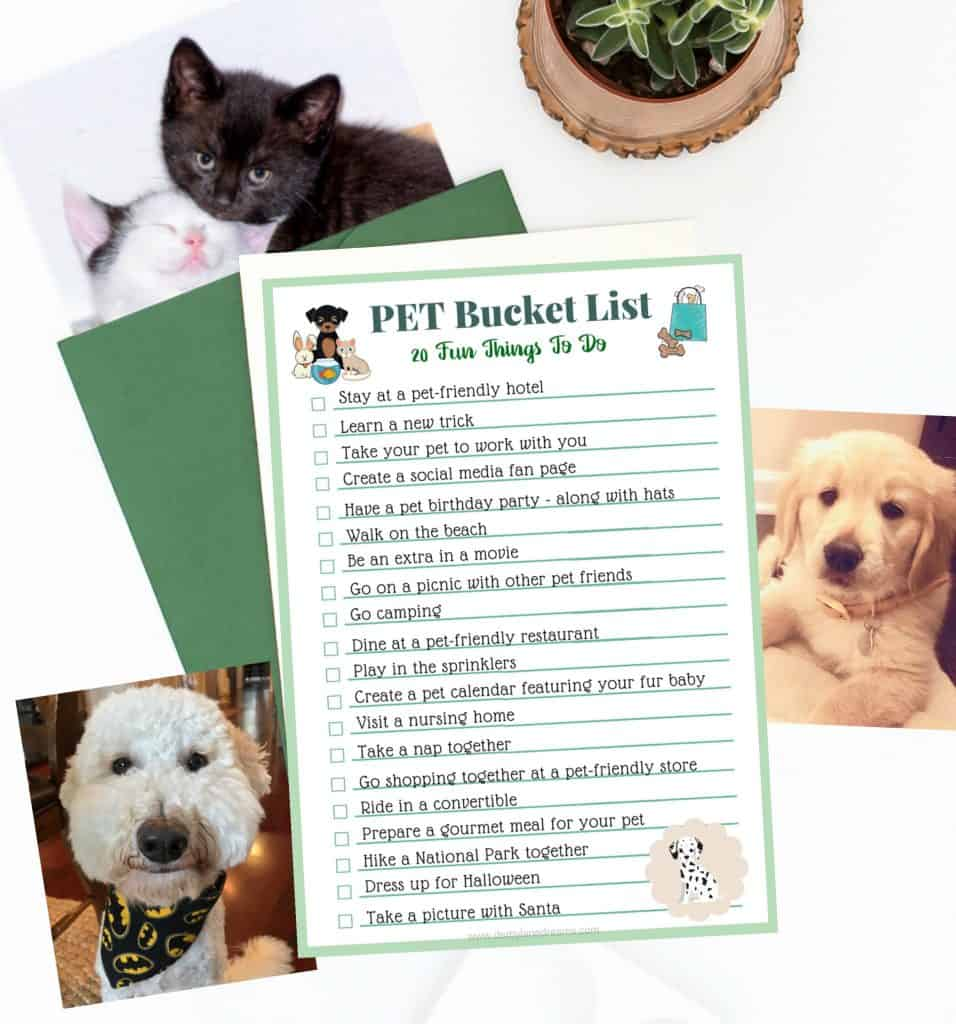 dog-cat-favorite-pet-products-amazon